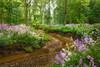 Spring's Revival (#0271)