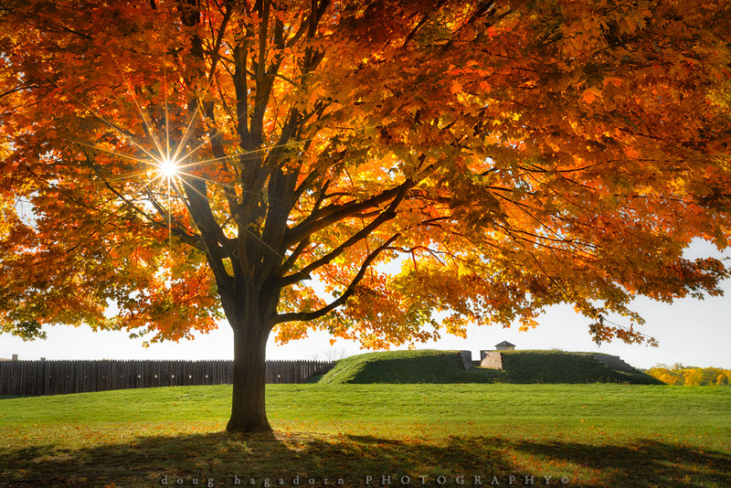 The Sun, The Fort, The Tree and Me (#0464)