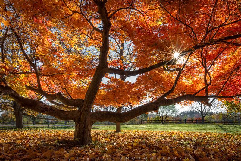 Autumn Leaves (#0322)