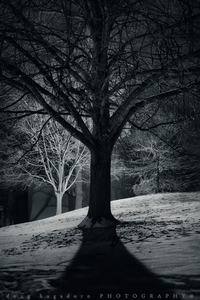 Darkness In The Park (#0356)