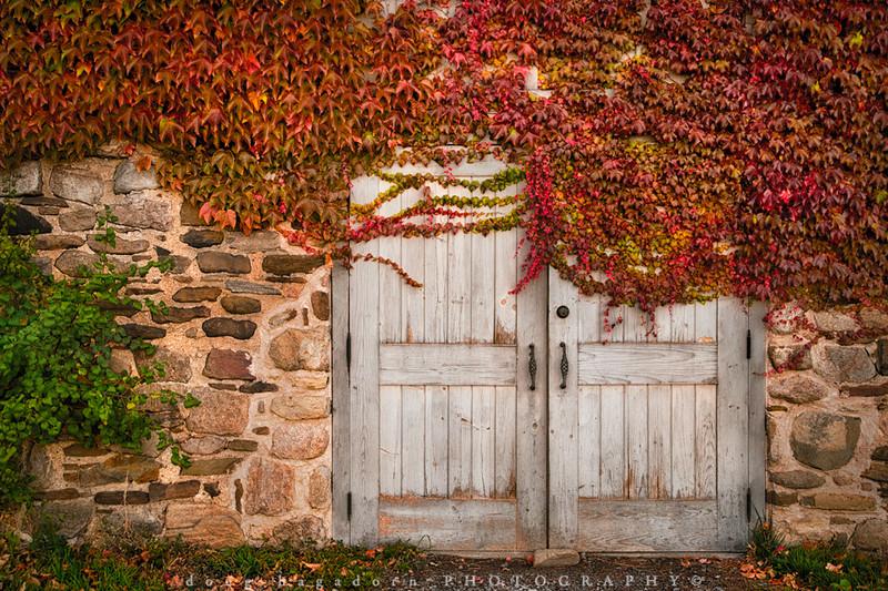 Ivy Covered Door (Part 2) (#0218)