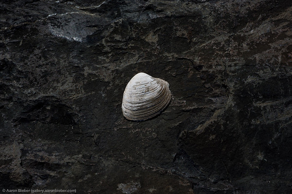 One White Seashell