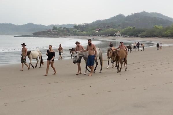 160507_GiganteBay_Horses_019