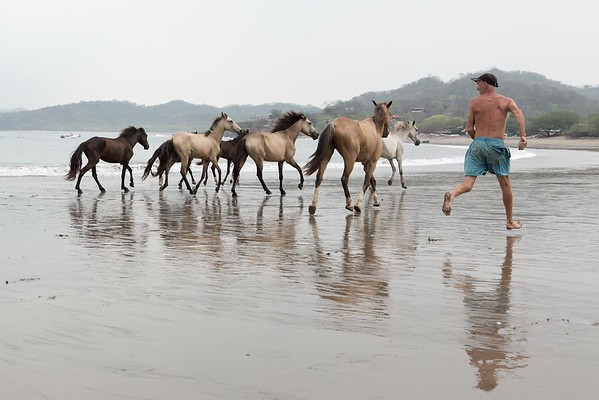 160507_GiganteBay_Horses_035