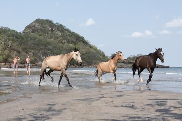 160507_GiganteBay_Horses_059