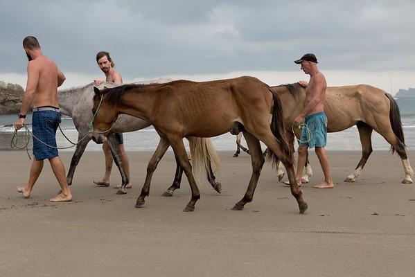 160507_GiganteBay_Horses_020