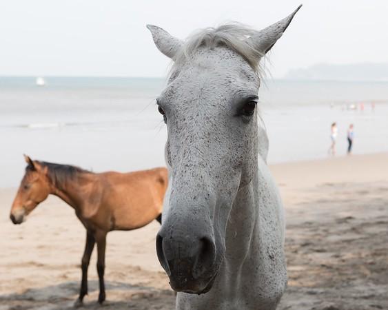 160507_GiganteBay_Horses_062
