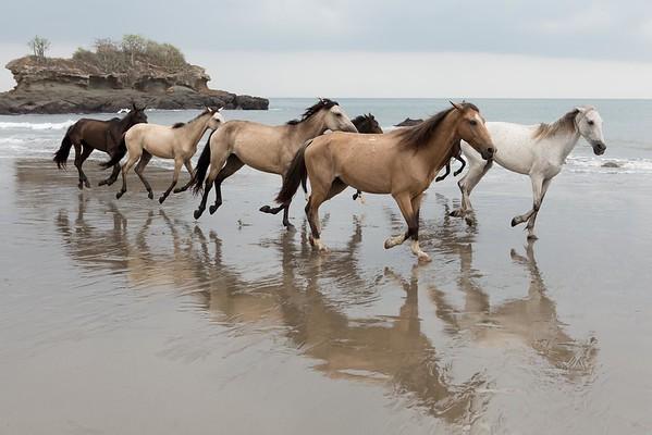 160507_GiganteBay_Horses_032