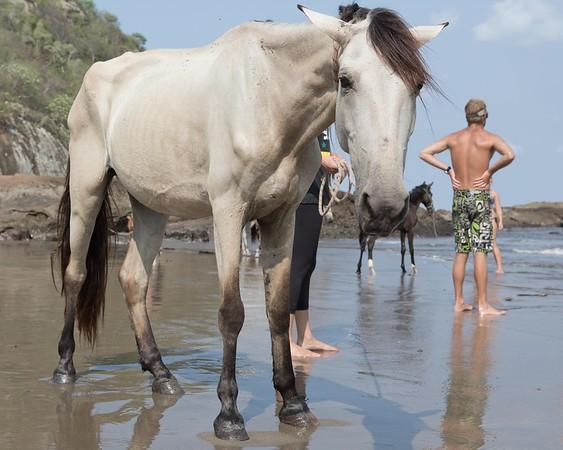 160507_GiganteBay_Horses_051