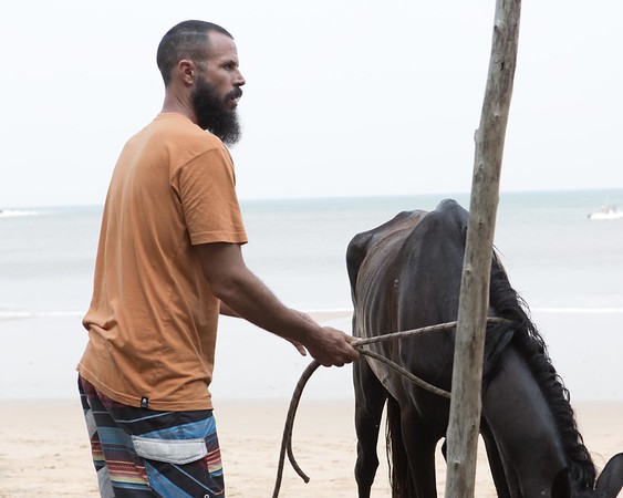 160507_GiganteBay_Horses_074