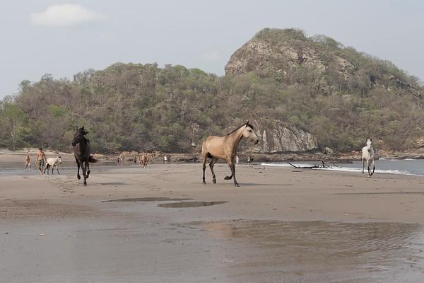 160507_GiganteBay_Horses_042
