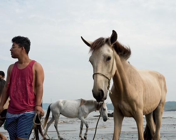 160507_GiganteBay_Horses_012