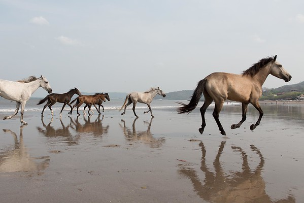 160507_GiganteBay_Horses_044