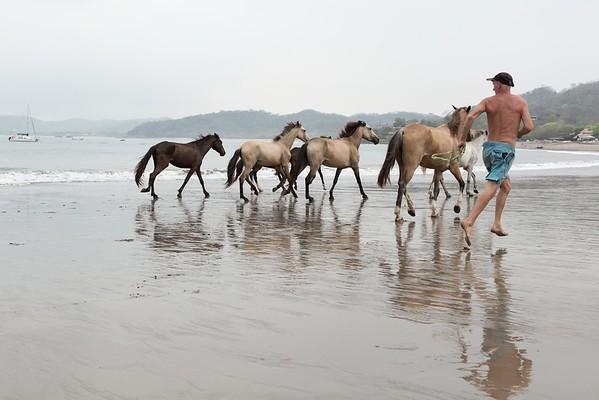 160507_GiganteBay_Horses_034