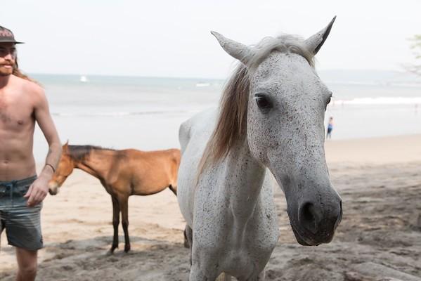 160507_GiganteBay_Horses_063