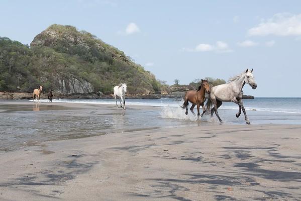 160507_GiganteBay_Horses_057