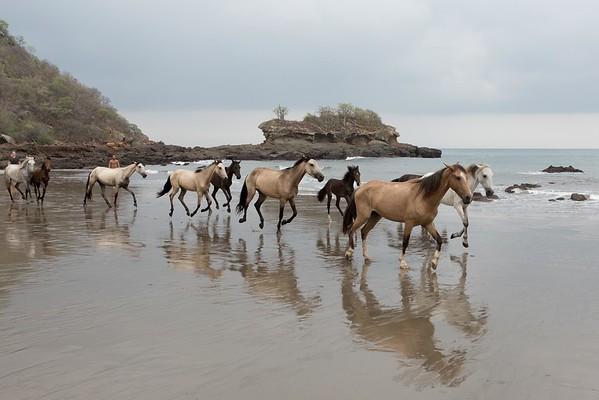 160507_GiganteBay_Horses_030
