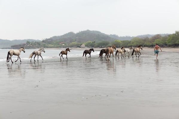 160507_GiganteBay_Horses_037