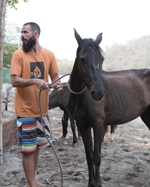 160507_GiganteBay_Horses_075