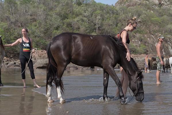 160507_GiganteBay_Horses_050