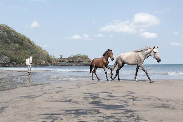 160507_GiganteBay_Horses_058