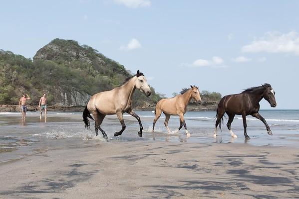 160507_GiganteBay_Horses_060