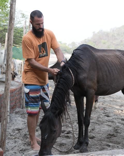 160507_GiganteBay_Horses_076