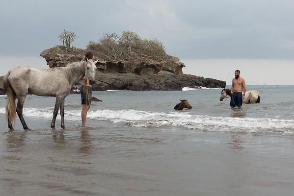 160507_GiganteBay_Horses_026
