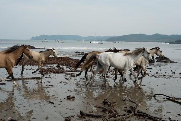 160507_GiganteBay_Horses_016