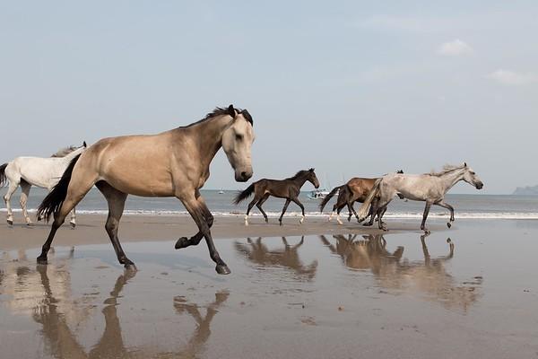 160507_GiganteBay_Horses_043