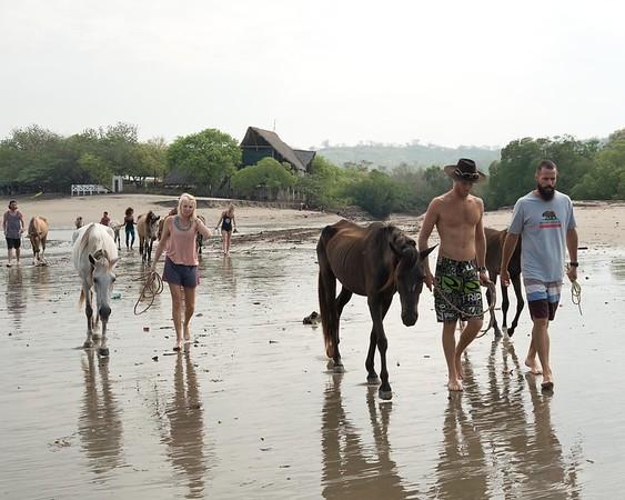 160507_GiganteBay_Horses_004