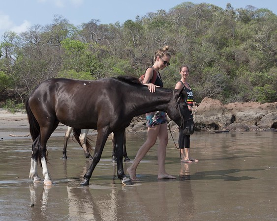 160507_GiganteBay_Horses_049