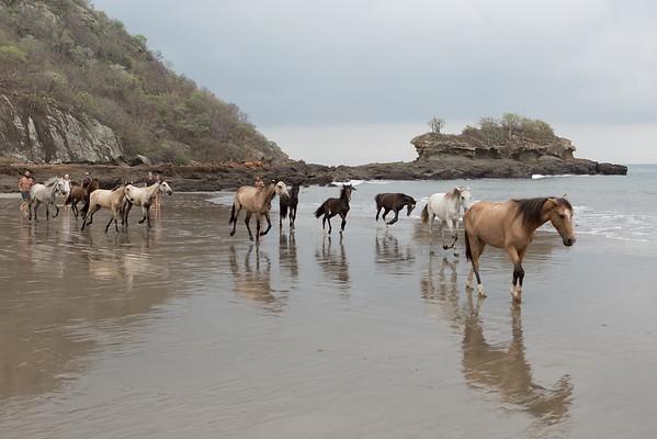 160507_GiganteBay_Horses_029