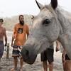 160507_GiganteBay_Horses_067