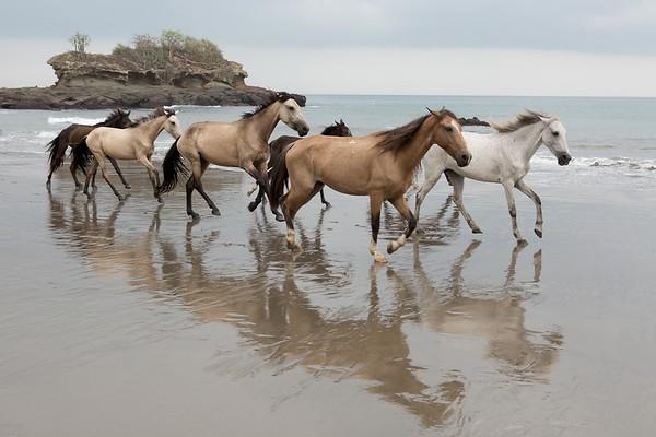 160507_GiganteBay_Horses_031