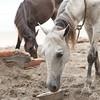 160507_GiganteBay_Horses_080