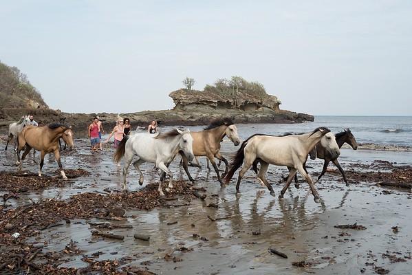 160507_GiganteBay_Horses_014