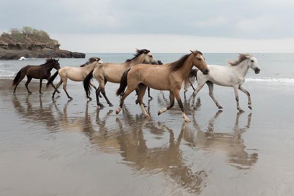 160507_GiganteBay_Horses_033
