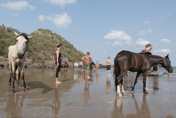 160507_GiganteBay_Horses_053