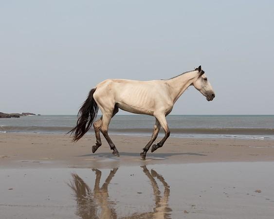 160507_GiganteBay_Horses_045