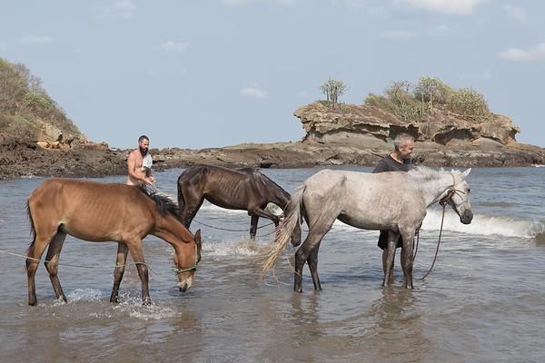 160507_GiganteBay_Horses_054