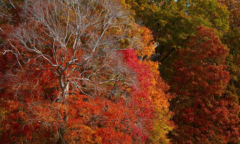 Fall colors at US National Arboretum .