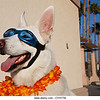 P6.8 / Doggles photo.  Choice  7 of 11