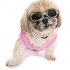 P6.8 / Doggles photo.  Choice 8 of 11