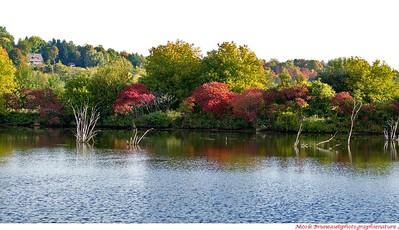 Marais à l'automne