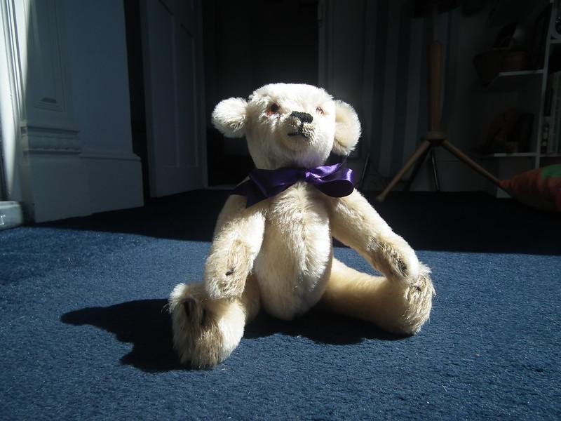Bear for Eta