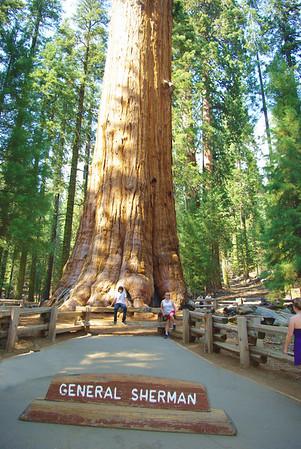Kings/Sequoia National Park