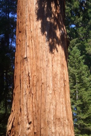 Sequoia National Park (Jenny)