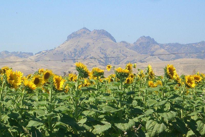 Joah...tolle sonnenblumen...und ein vulkan...im hintergrund...in einem seeeehr ebenen land und keiner weis bisher wie er entstanden ist...