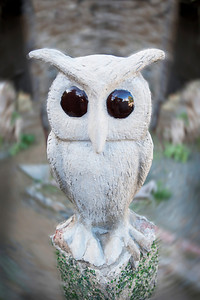 one of Helen's owls